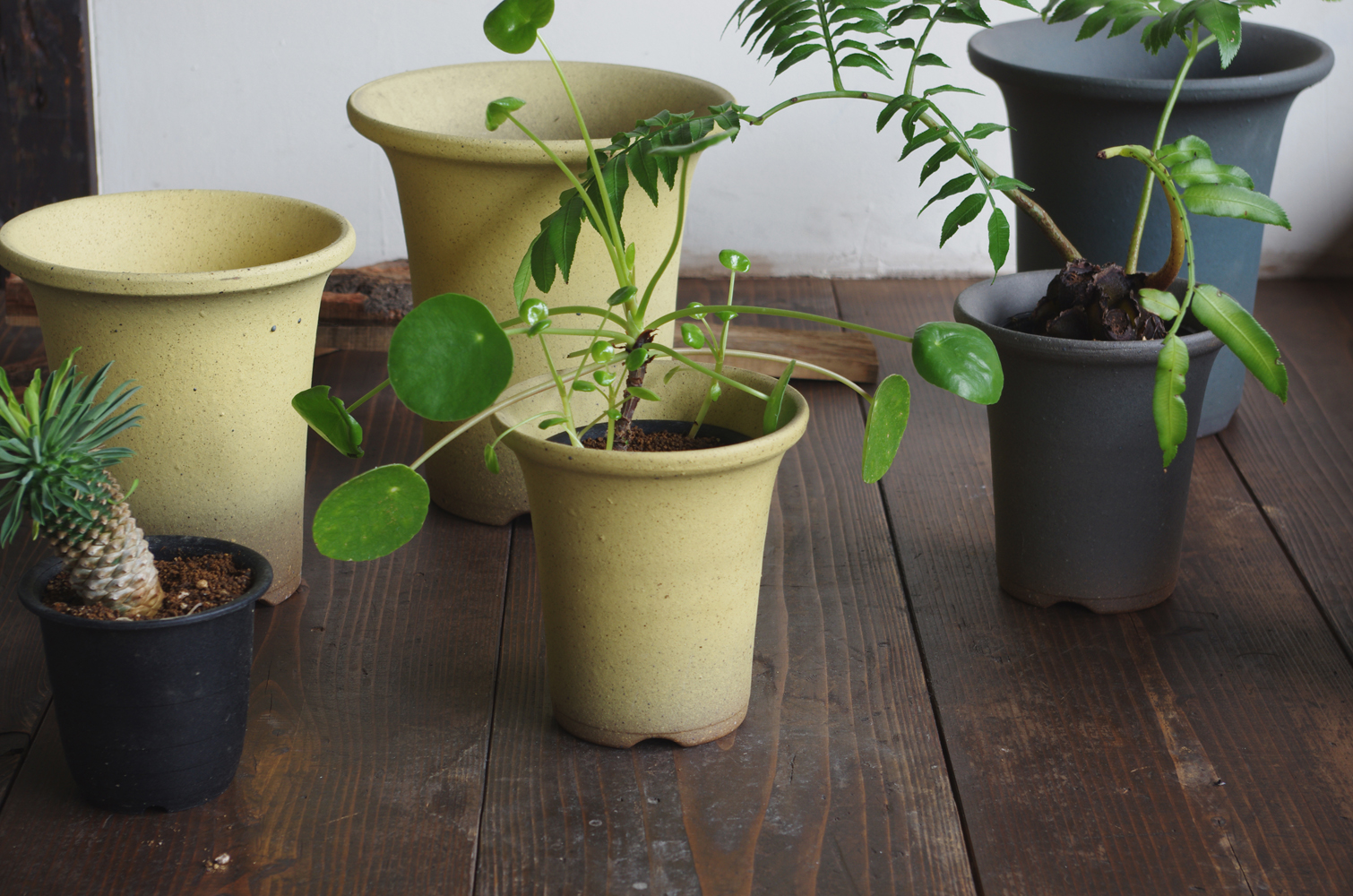 Orchid pot-1