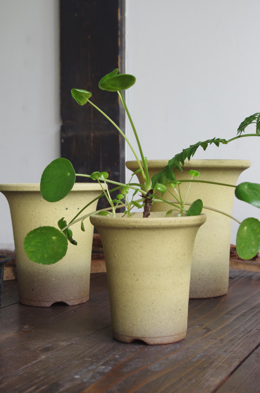 Orchid pot-2