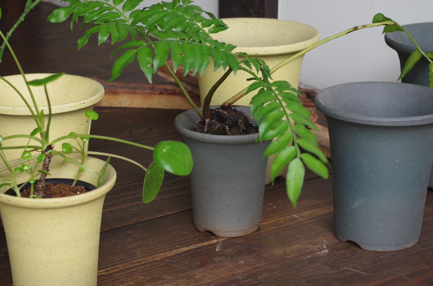 Orchid pot-5